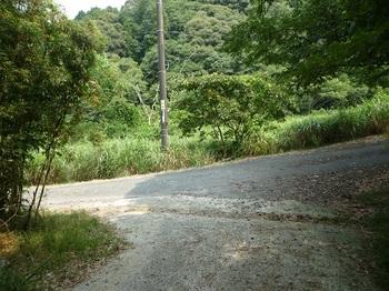 P1110033林道合流点.JPG