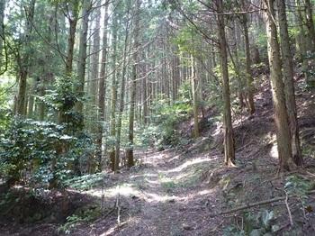 P1110047植林帯.JPG