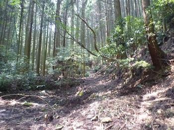 P1110049棚田跡沿いの幅広山道.JPG