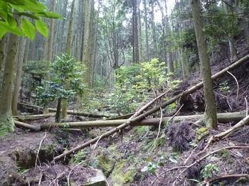 P1110052荒れた山道.JPG