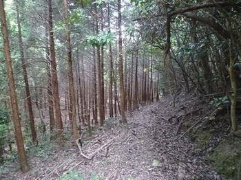 P1110060山道.JPG
