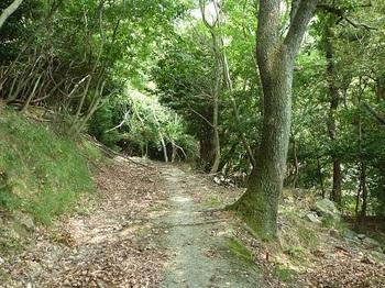 P1110062コンクリート林道に出る(左方向).JPG