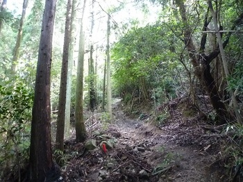 P1110079植林沿いを急登.JPG
