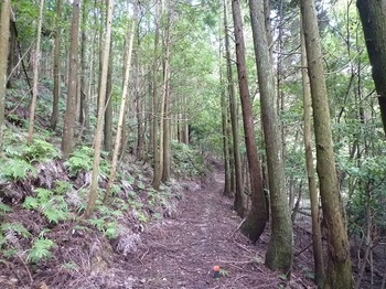 P1110085植林帯の巻き道.JPG