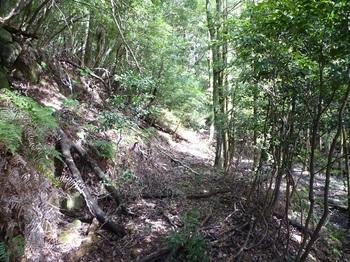 P1110088少し荒れた山道.JPG