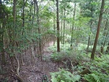 P1110122植林境の下り.JPG