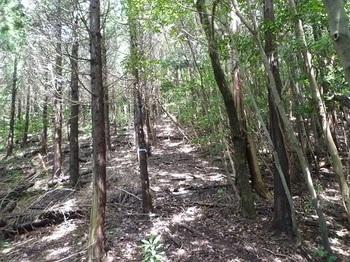 P1110150 植林境の上り.JPG