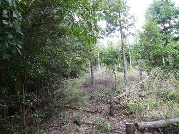 P1110157植林境上り.JPG
