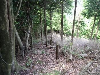 P1110161植林境の下り.JPG