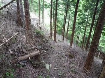 P1110162途中から山道(踏み跡)と出会う.JPG