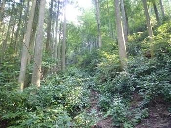 P1110289草被りの作業道.JPG