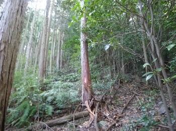 P1110303植林境を直登.JPG