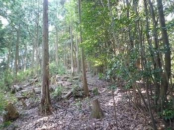 P1110305植林境.JPG