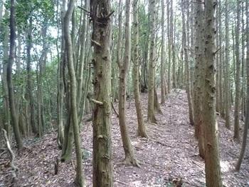 P1110310ヒノキ植林境.JPG