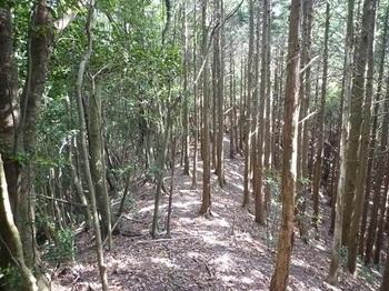 P1110312ヒノキ植林境.JPG