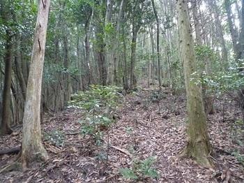 P1110313植林境の登り.JPG