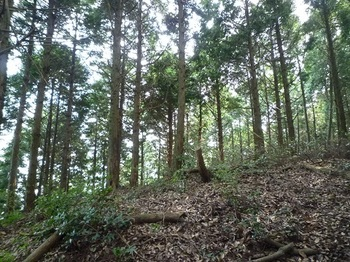 P1110314北尾根合流部・ヒノキ植林境.JPG