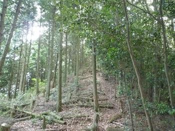 P1110316ヒノキ植林境.JPG