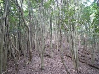 P1110337雑木尾根の登り.JPG