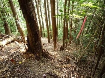 P1110358植林境尾根下降点.JPG
