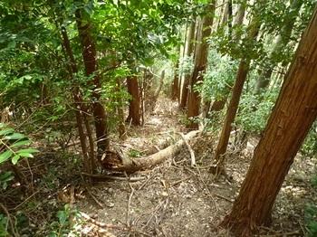 P1110359植林境尾根を急降.JPG