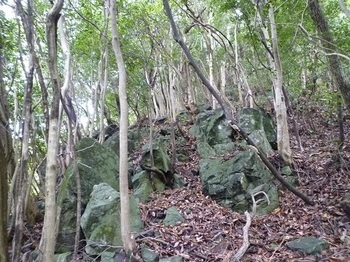 P1110421岩が散在する雑木尾根.JPG