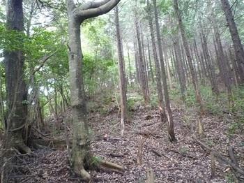 P1110424ヒノキ植林境尾根と合わさる.JPG