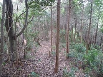 P1110434ヒノキ植林境尾根の下り.JPG