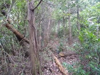 P1110437植林境.JPG