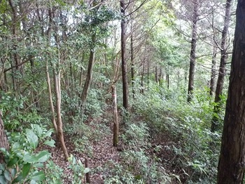P1110441ヒノキ植林境.JPG