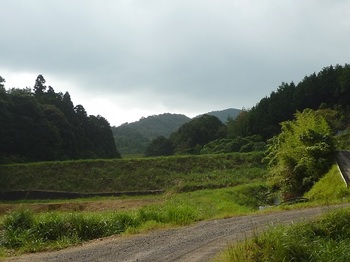 P1110470林道・堤.JPG