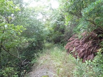 P1110475荒れ加減のp林道.JPG