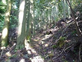P1110674スギ植林の山道.JPG