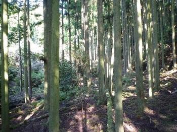 P1110681広い谷の山道.JPG