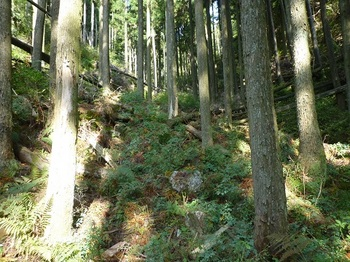 P1110686シダや下草が被る踏み跡.JPG
