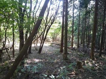 P1110744ヒノキ林境.JPG