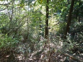 P1110748荒れた植林境.JPG