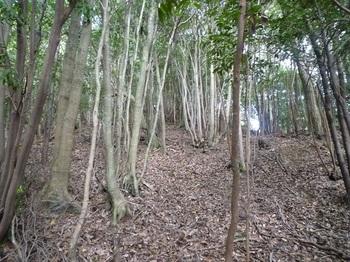 P1120110雑木疎林の支尾根.JPG