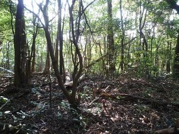 P1120139支尾根分岐・ヒノキ林境と分かれる.JPG