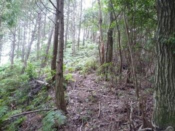 P1120161ヒノキ・シダ植林境.JPG