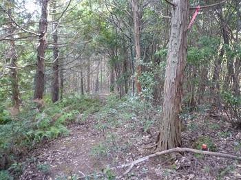 P1120165 次の370mピーク・ヒノキ林境.JPG