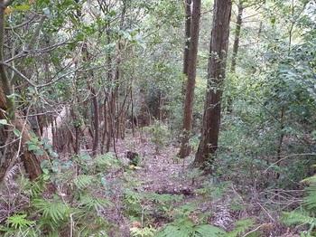 P1120177植林境.JPG