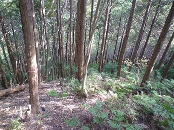 P1120181植林境.JPG