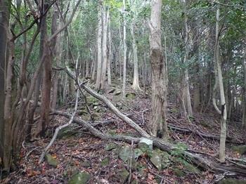 P1120248角石の多い雑木尾根.JPG