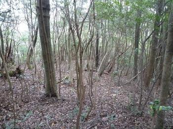 P1120252雑木疎林.JPG