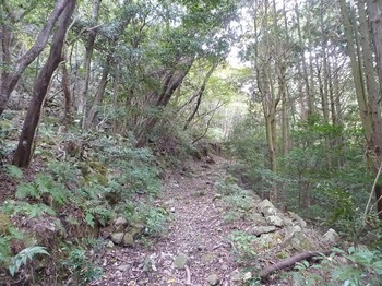 P1120356林道.JPG