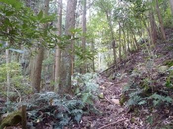 P1120359山道.JPG
