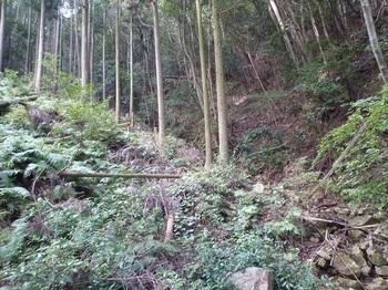 P1120373植林谷を詰める.JPG