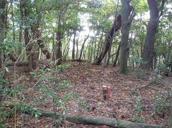 P1120402支尾根分岐・植林境右へ.JPG