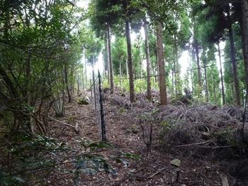 P1120405スギ植林沿いのネット(左方向).JPG